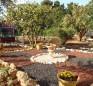 Safed Inn 13